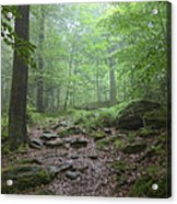 Silence Of The Forest Acrylic Print