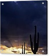 Silhouetted Saguaro Cactus Sunset At Dusk Arizona State Usa Acrylic Print
