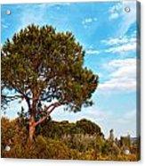 Single Pine Tree Against Blue Autumn Sky Acrylic Print