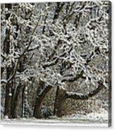 Snow On Trees Acrylic Print