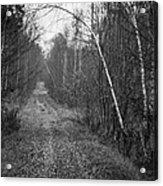 Solitude Forest Acrylic Print