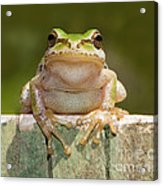 Someone Watching Over Me Acrylic Print by Mimi Ditchie