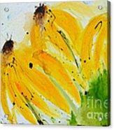 Sonnenhut -  Floral Painting  Acrylic Print