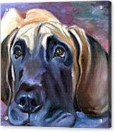 Soulful - Great Dane Acrylic Print by Lyn Cook