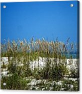 Sowing Wild Oats Acrylic Print