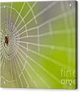 Spider Web With Dew Drops With Spider On Web Acrylic Print