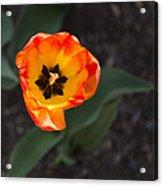 Spring Flowers No. 10 Acrylic Print