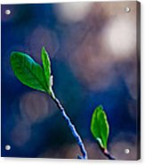 Spring In Bloom Acrylic Print by Linda Unger