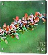 Spring Raindrops On Leaves - Digital Paint Acrylic Print