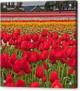 Springtime Tulip Field Art Prints Acrylic Print