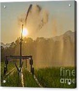 Sprinkler Irrigation Acrylic Print