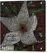 Star Fish Cactus  Acrylic Print