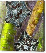 Starfish On Neptune Grass Acrylic Print
