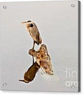 Still Hunter Acrylic Print