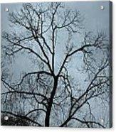 Stormy Trees Acrylic Print