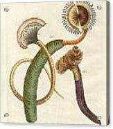 Strange Worms Acrylic Print