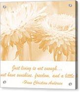 Strawflowers Acrylic Print