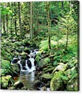 Stream Flowing Through A Forest, Usa Acrylic Print