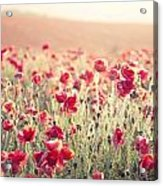 Stunning Poppy Field Landscape Under Summer Sunset Sky With Cros Acrylic Print