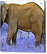 Styled Environment-the Modern Elephant Bull Acrylic Print