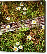 Summer Flowers On The Blue Ridge Parkway 7653 Acrylic Print