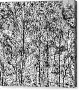 Summer Forest Trees Acrylic Print