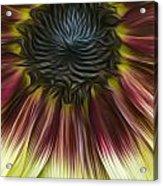 Sunflower In Oils Acrylic Print