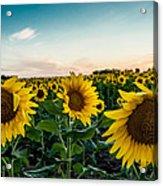 Sister Sunflowers Acrylic Print