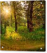 Sunrise In The Forest Acrylic Print