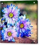 Sunset Flowers Acrylic Print by Tammy Smith
