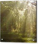 Sunshine Morning Acrylic Print