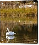 Swan And Boat Acrylic Print