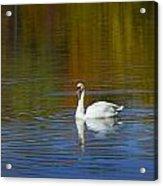 Swan On Wintergreen Lake Acrylic Print