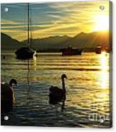Swans In Sunset Acrylic Print