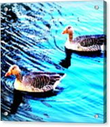 Swim With Me To The End Of Time  Acrylic Print