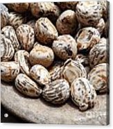Tagua Nuts In A Wood Dish Acrylic Print