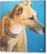Tan Greyhound Acrylic Print
