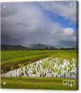 Taro Storm Acrylic Print