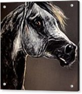 The Arabian Horse Acrylic Print
