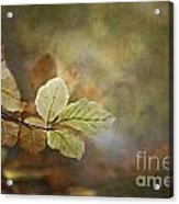 The Beauty Of The Common Acrylic Print