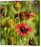 The Colors Of Summer  Acrylic Print
