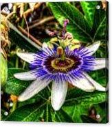 The Flower 14 Acrylic Print