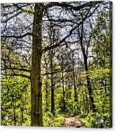 The Forest Path Acrylic Print by David Pyatt
