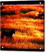 The Golden Grain Of A Sunset Dream Acrylic Print