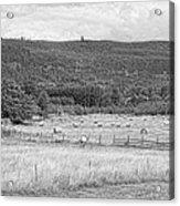 The Hay Field Acrylic Print