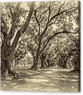 The Lane Sepia Acrylic Print