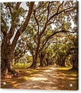 The Lane Acrylic Print