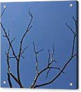 The Lightning Tree Acrylic Print