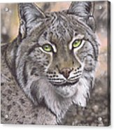 The Lynx Effect by Karie-Ann Cooper