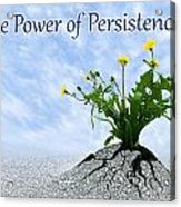 The Power Of Persistence Acrylic Print